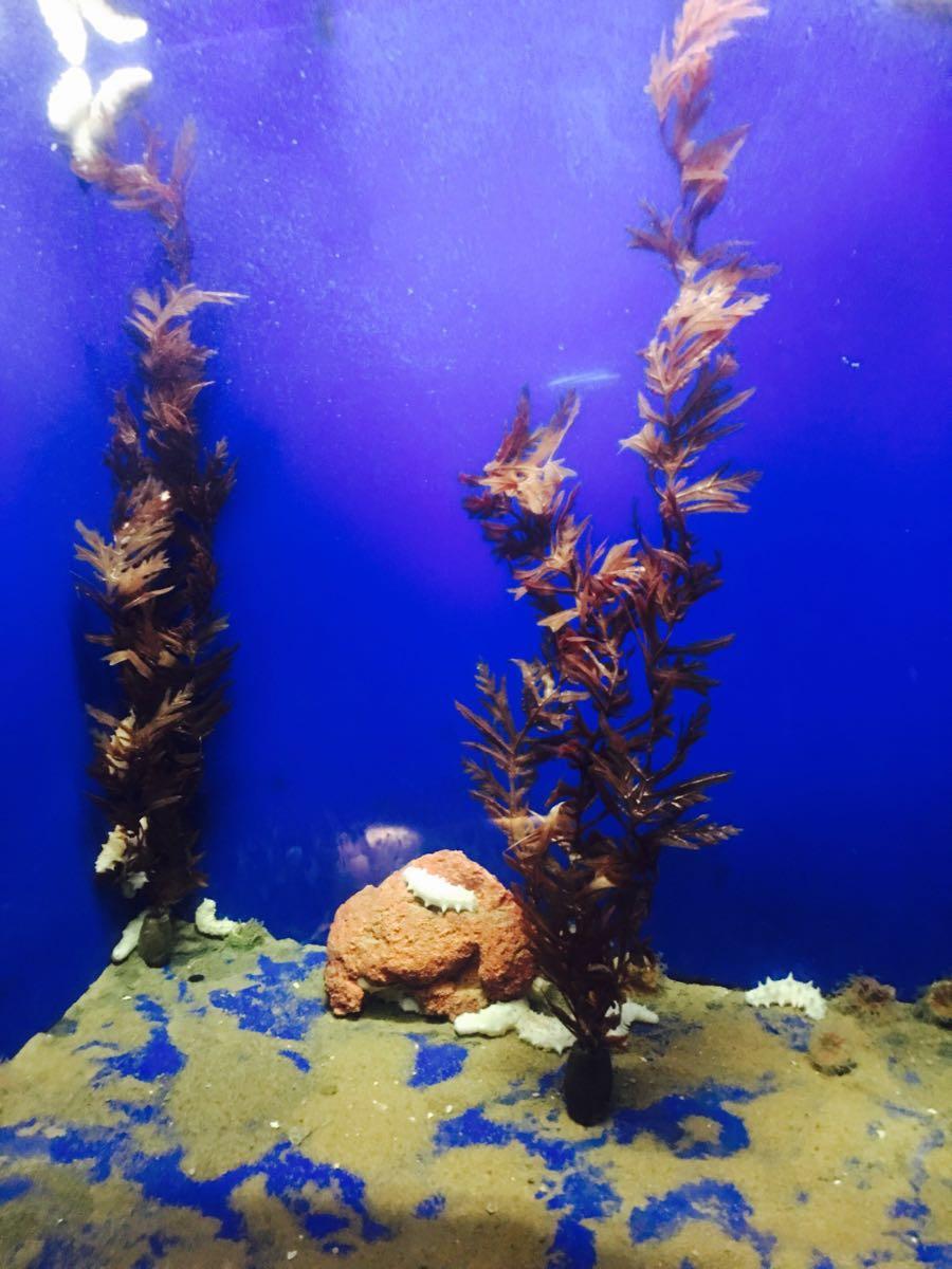 对于海底世界的向往,则是来源于那句没看过海底世界,别说你到过青岛。这句话太深入人心了。周末跟老公一起带着爸爸妈妈过来的,对于老人购票有优惠,比较划算。景区不管是地理位置还是环境都很好,景区包含梦幻水母宫、新海洋生物馆、海兽馆、新淡水生物馆、新鲸馆、海底世界、海洋科技馆七大展馆,可以说是集海洋旅游观光和科普教育于一体的观光基地。