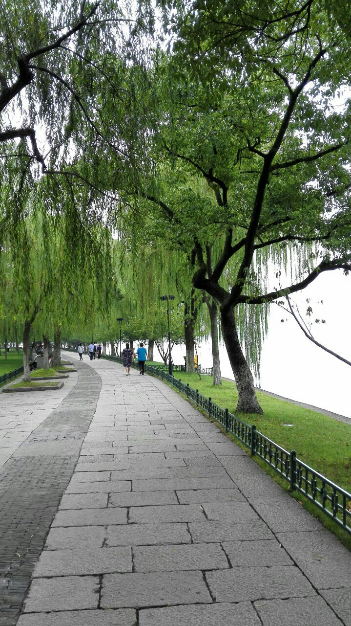 西湖杨柳古筝曲谱