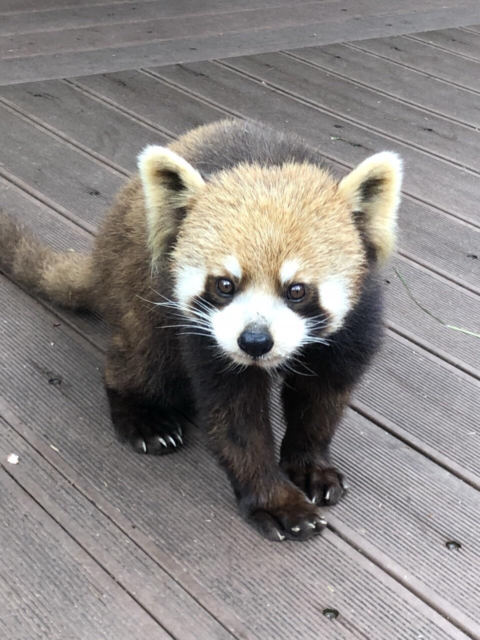 公园环境优美,值得游玩,小熊猫很可爱