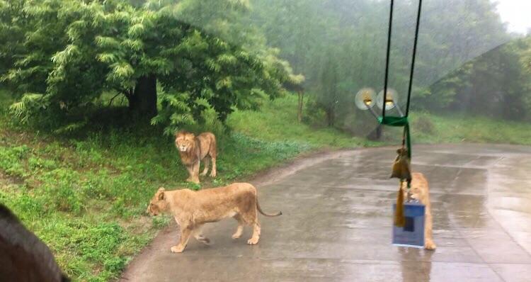 秦岭野生动物园旅游景点攻南山老年人略图竹海一日游攻略图片