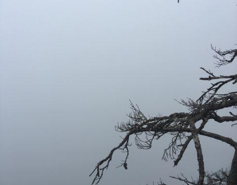 2019红河谷森林公园攻略,恩施红河谷森林公园长沙眉县自驾游门票图片