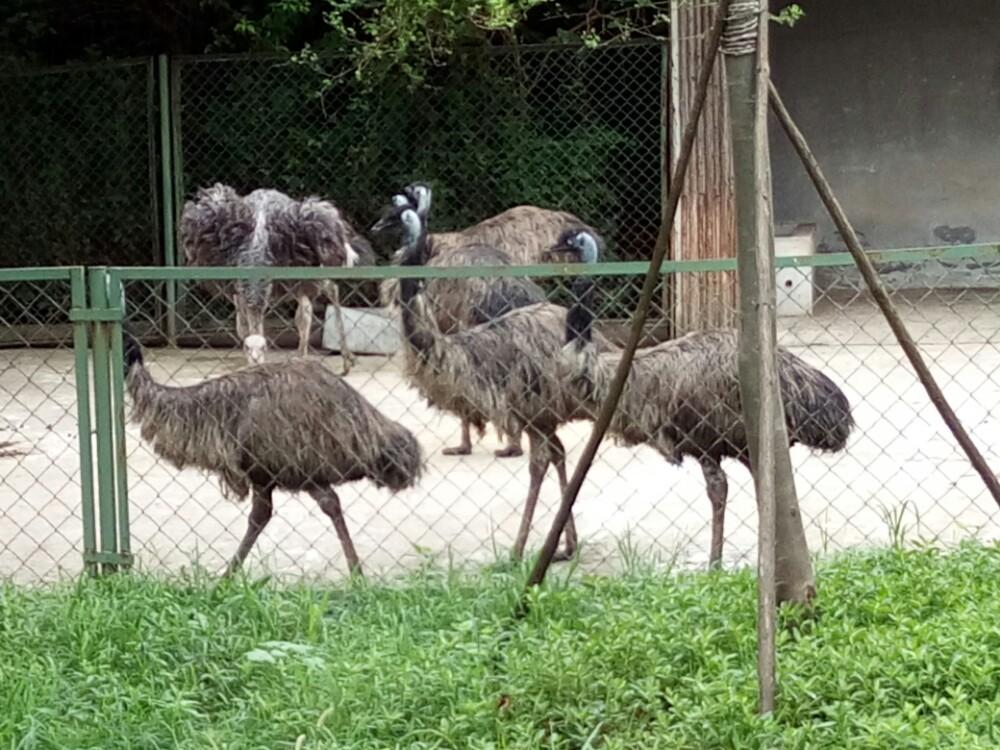 【携程攻略】安徽合肥合肥野生动物园好玩吗