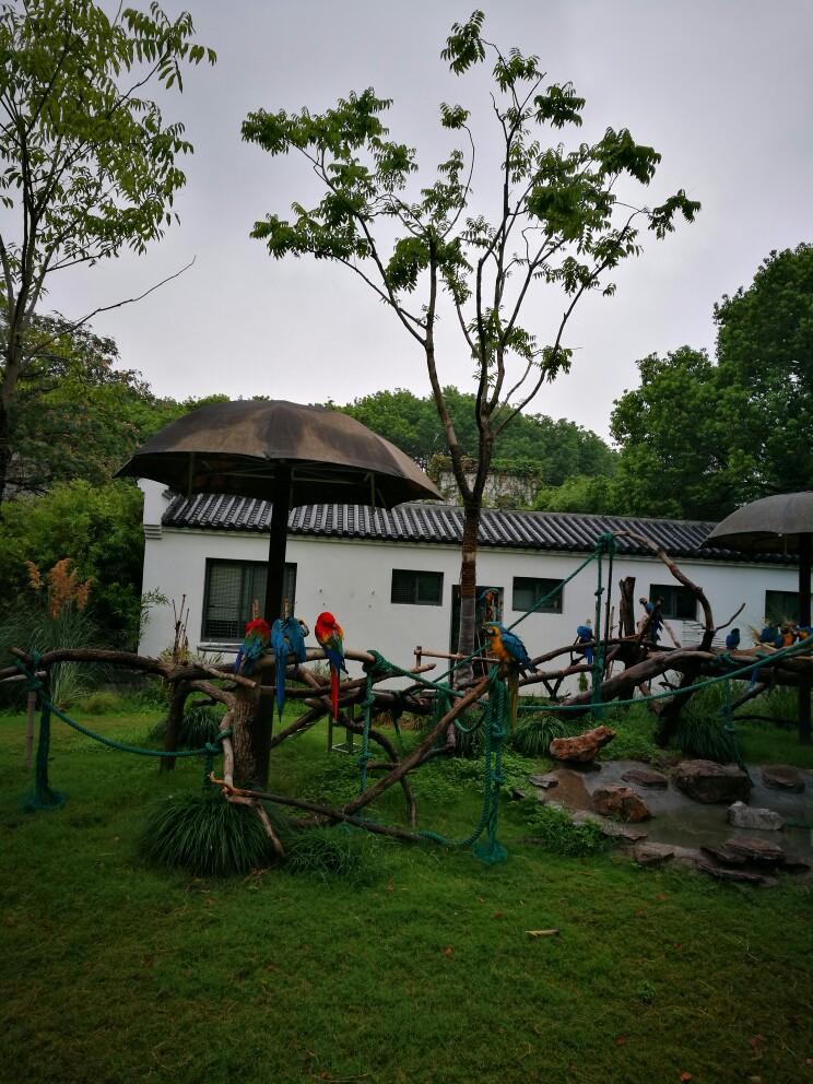 上海动物园邻近虹桥机场,原名西郊公园,是许多老上海人的回忆。这里有熊猫、麋鹿、金丝猴、东北虎等珍稀动物,以及长颈鹿、袋鼠、企鹅等。小朋友们还可亲手喂食小动物,或去科教馆了解动物知识。在大草坪上玩耍晒太阳、划船、坐摩天轮,也是不错的选择。 上海动物园共有六百多种动物,除了有两栖爬行类、食草动物、猛兽、飞禽等各种动物展区,以及科教馆、金鱼廊、蝴蝶馆等展馆外,还有芦苇丛生,栖息着鹈鹕、天鹅、鸳鸯等鸟类的天鹅湖。整个园内花繁叶茂、环境优雅,更有小河流穿流其中,走在园中可以感受到大都市内难得的自然生态气息。