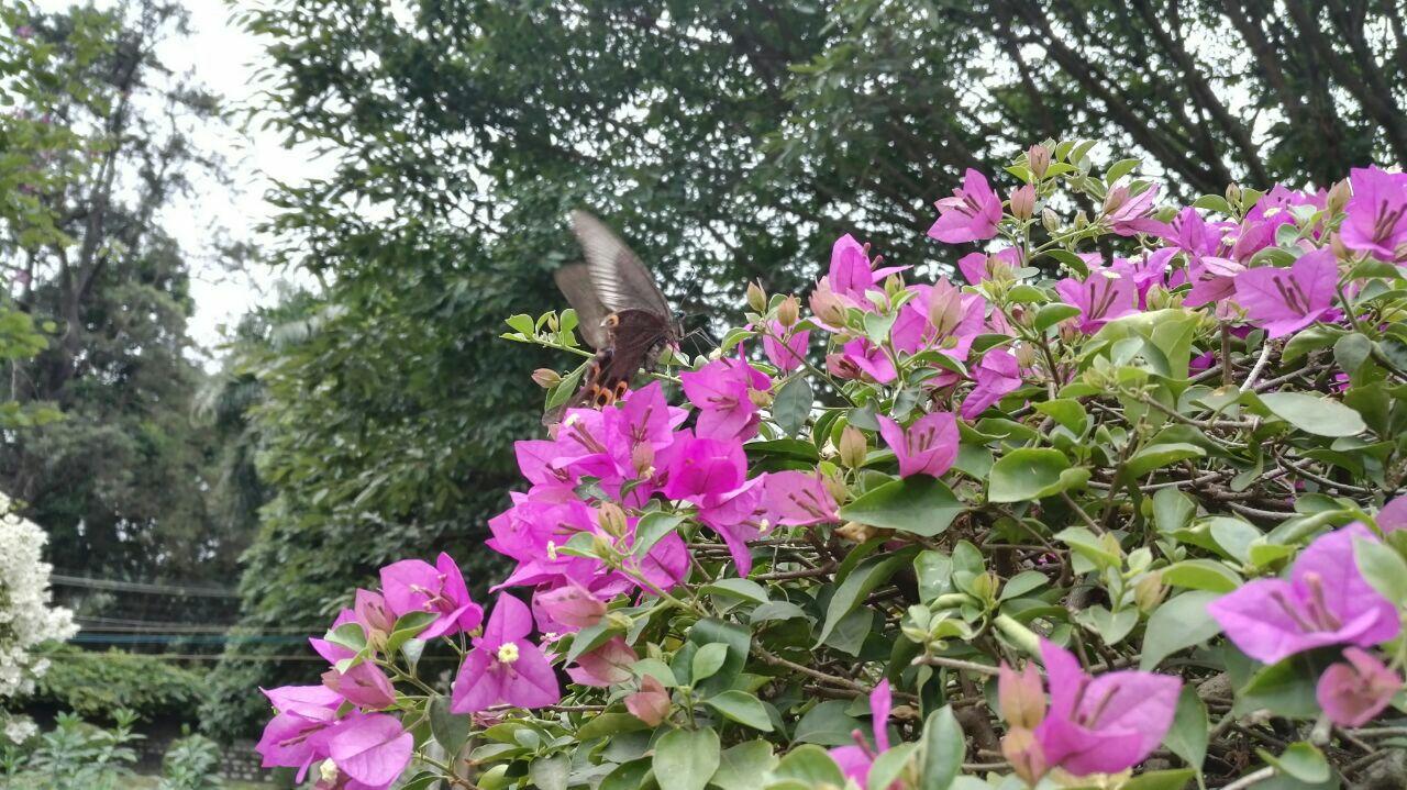 所谓太和花园,其实也是梧州的动物园,还是一家花木公司,据说梧州市90