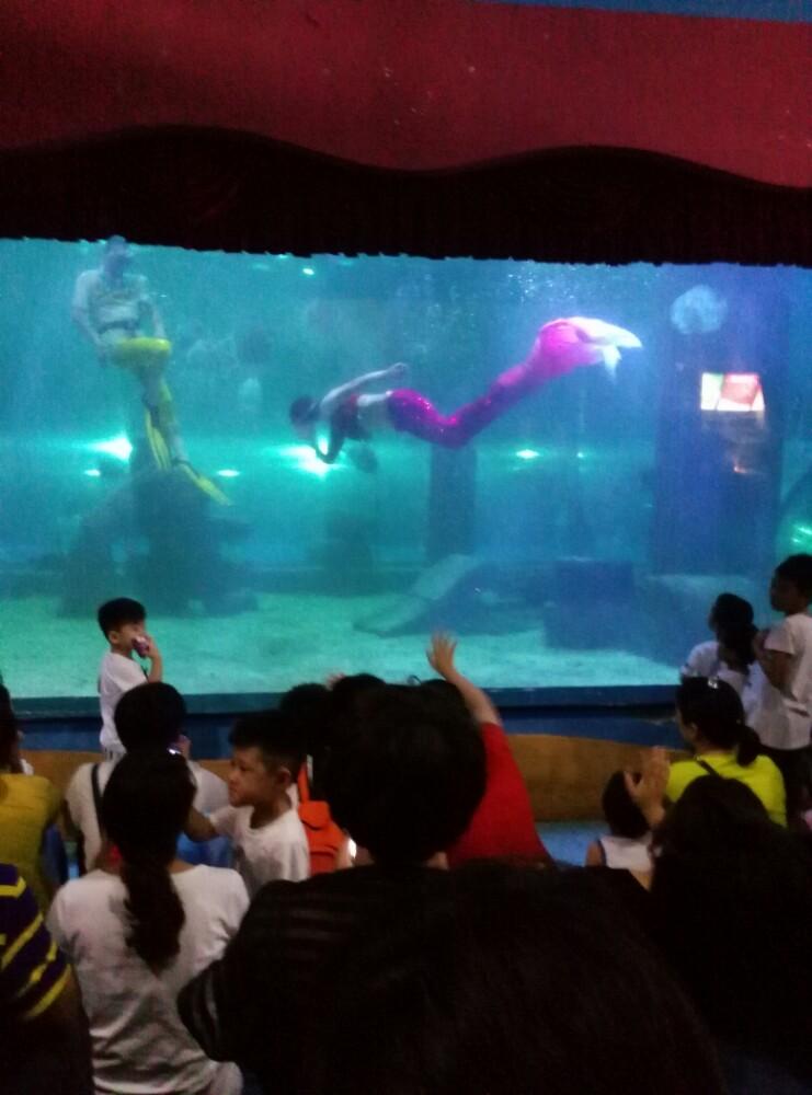 壁纸 海底 海底世界 海洋馆 水族馆 741_1000 竖版 竖屏 手机