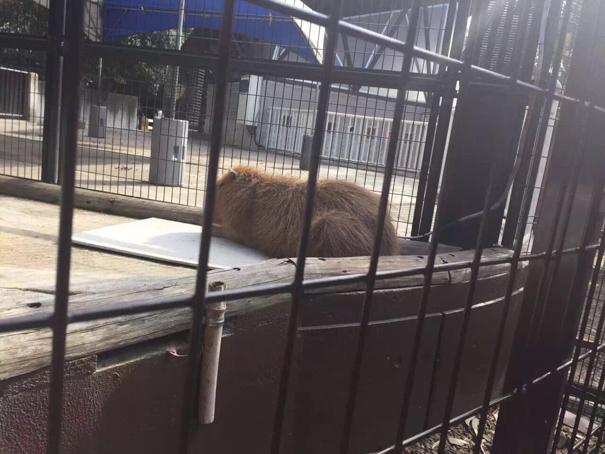【携程攻略】关东东京都东京上野动物园好玩吗,关东上