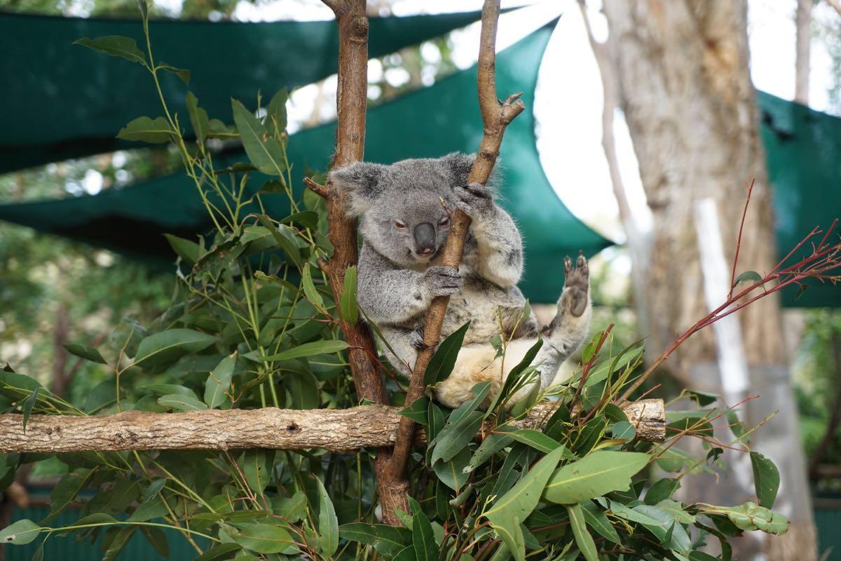 【携程攻略】昆士兰可伦宾野生动物保护区景点