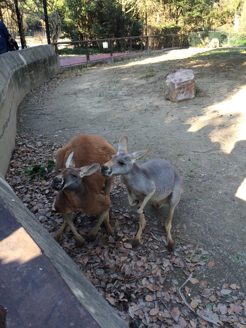 【携程攻略】上海上海野生动物园景点,提前订的周六39