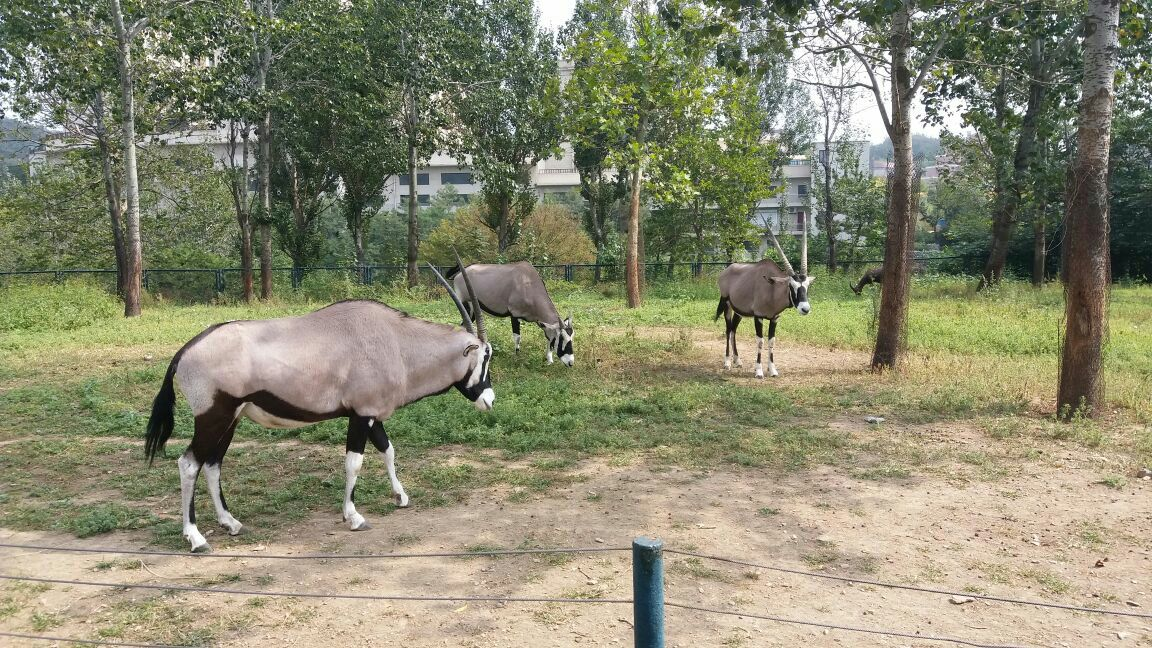 大连森林动物园位于大连海滨风景名胜区白云山(国家级风景名胜区)内,依山傍海,环境优美,分为一期圈养区和二期散养区(野生放养园)两部分。动物表演是森林动物园的特色景观。圈养区内设有综合动物表演场和猛兽表演场。散养区内设有泰国风情非常6+2大象表演场。每日循环演出精彩的动物表演节目。在一期圈养区和二期野生放养区内展示的动物有200余种、3000多只,其中有多种国家级保护动物,也有许多从国外引进的珍稀动物品种。游客既可以看到馆内圈养的飞禽百鸟、爬行类等动物,还可以看到放养的猛兽及大型食