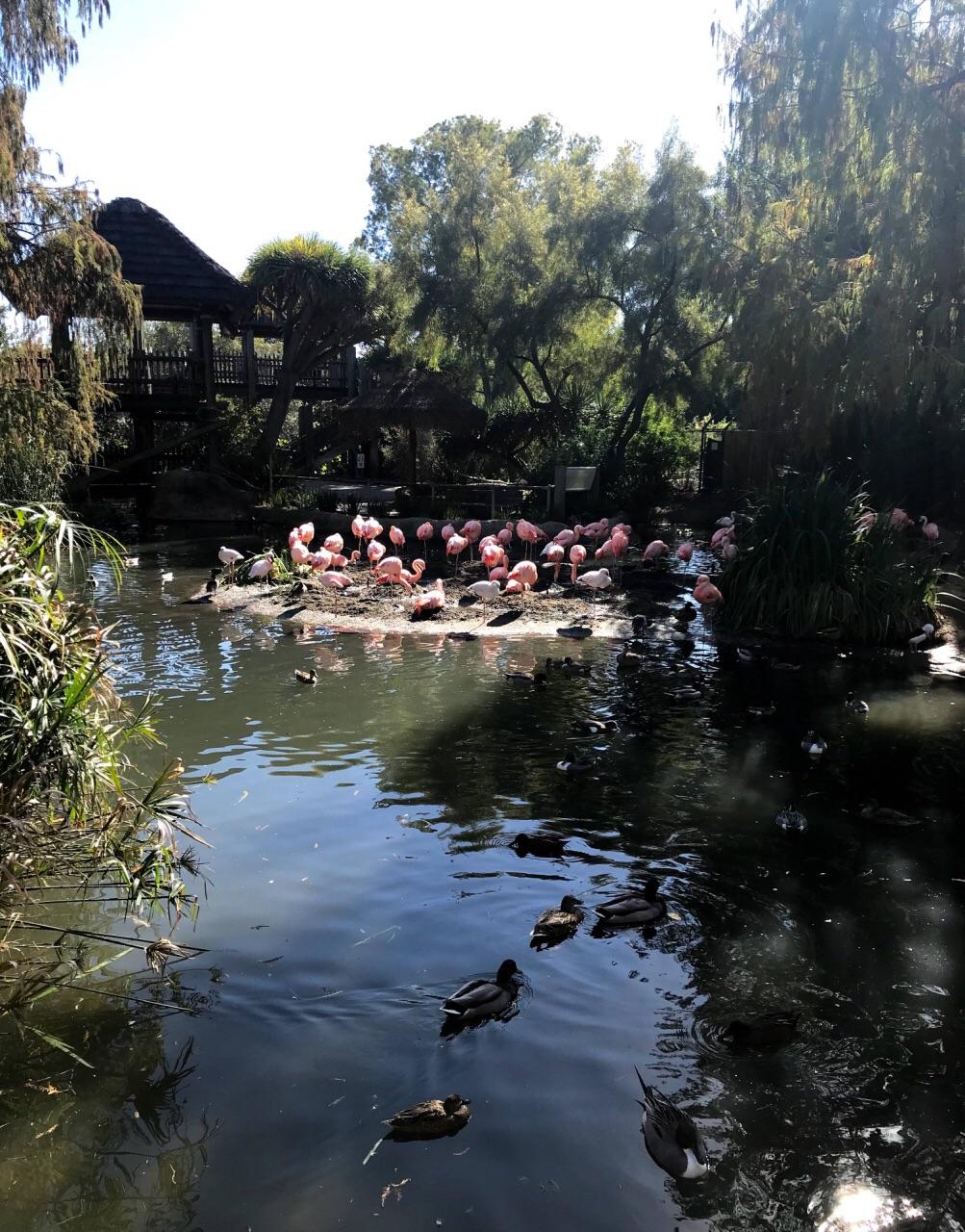 在圣地亚哥野生动物园这个野生保护区内,动物们自由得漫步,仿佛在他们自己的野生家园。游客能够通过安静的铁轨进入园区,欣赏外来物种和植物。进入野生动物园,来自非洲的鸟禽会给你带来第一声的问候。几步路的距离便是Nairobi村,它是被蒙巴萨礁湖(Mombasa Lagoon)环绕的热带天堂。这个热闹的村落有许多商店,餐馆,博物馆和活动中心,在这里游客能够购物,歇脚,查询地图和计划行程等等。Nairobi村位于野生动物园的中心,孩子可以尽情享受这里的游乐设施,各个年龄的游客都能从喂鸟中得到极大的乐趣。 参观时,不