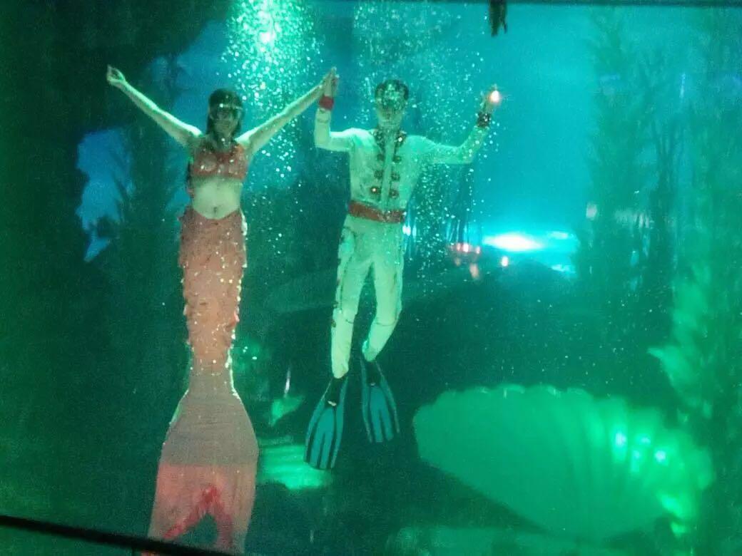 壁纸 动物 海底 海底世界 海洋馆 水族馆 鱼 鱼类 1040_780