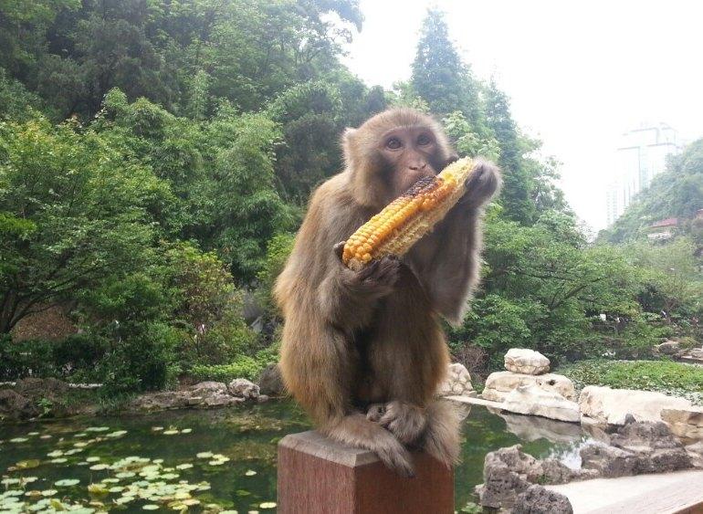 公园幽静的山谷里建有动物园,清泉怪石,随处可见,有成群的灵猴和鸟类