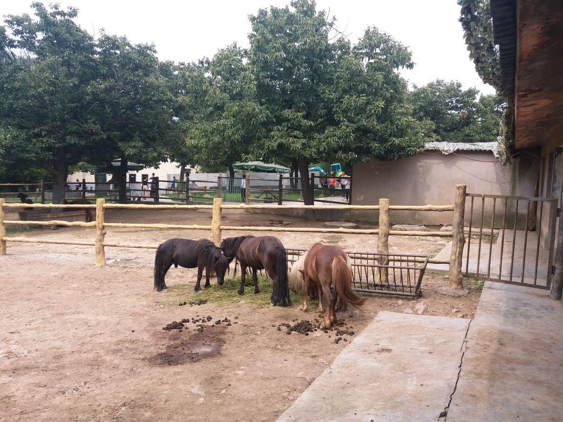 秦岭野生动物园旅游景点攻略图重弩ol攻略世界图片