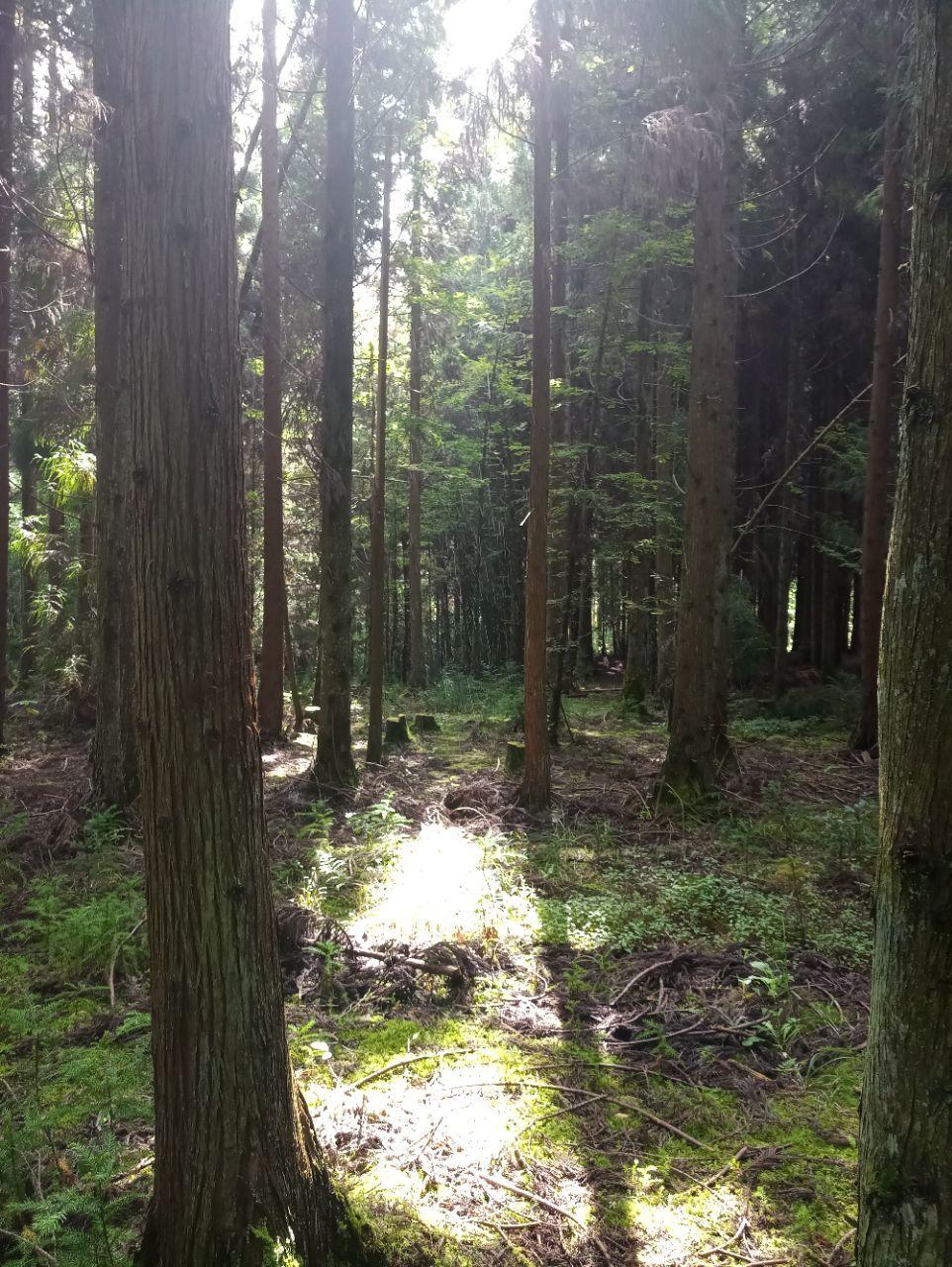 黄水国家森林公园图片
