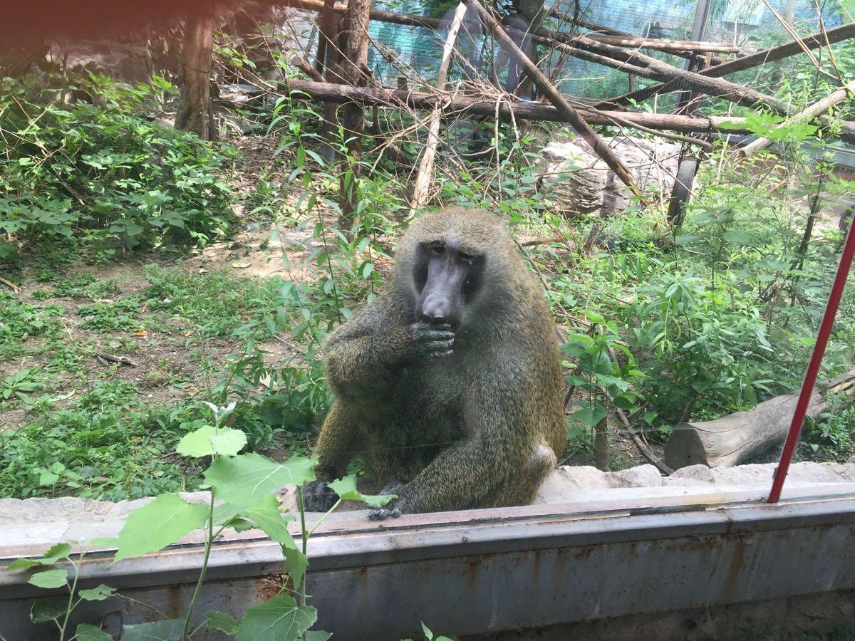 里面有很多濒危品种,在全国动物园都几乎难见