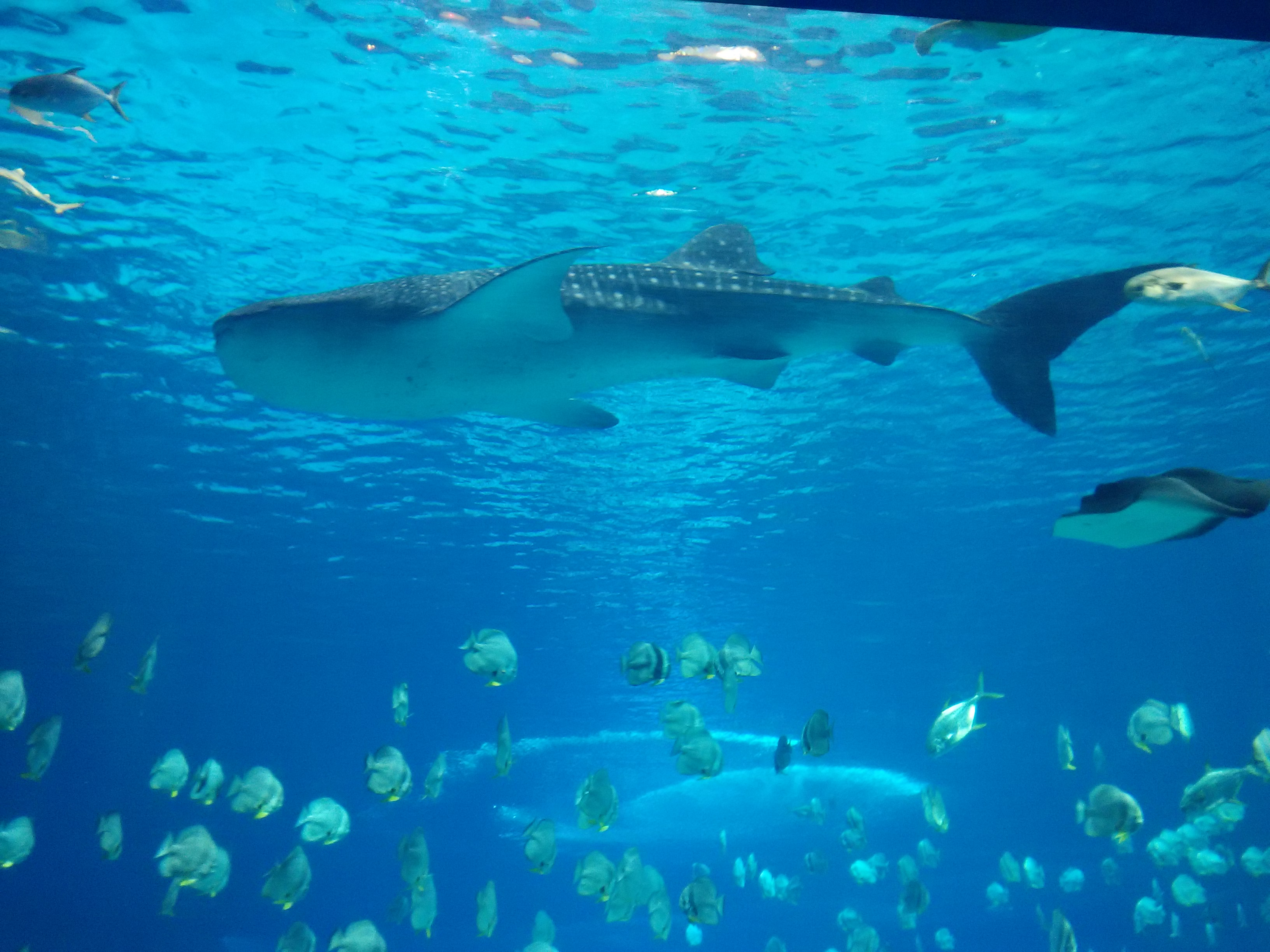 是全球较大的海洋动物主题公园