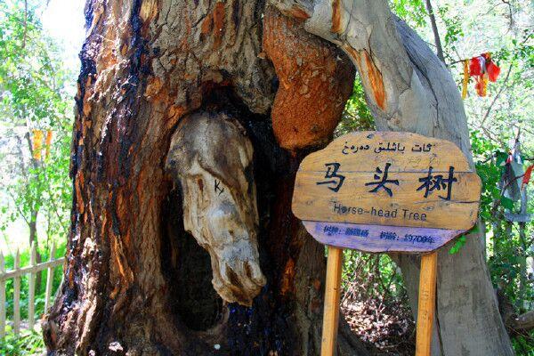 【携程攻略】新疆阿克苏神木园好玩吗,新疆神木园景点