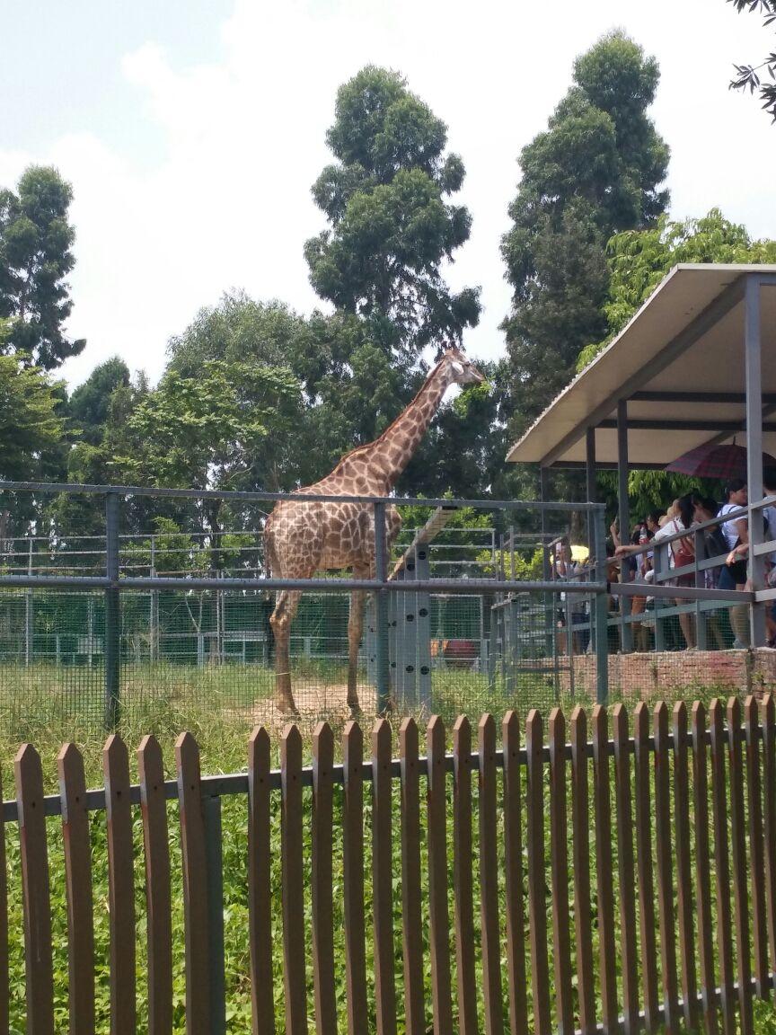 香市动物园