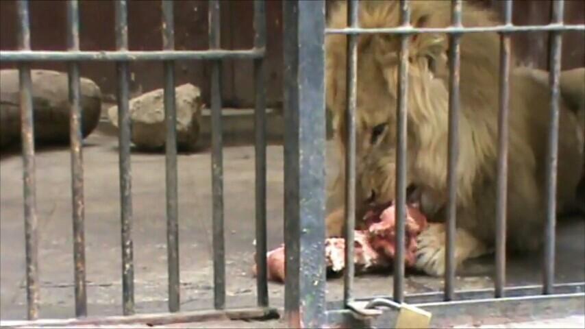开罗动物园