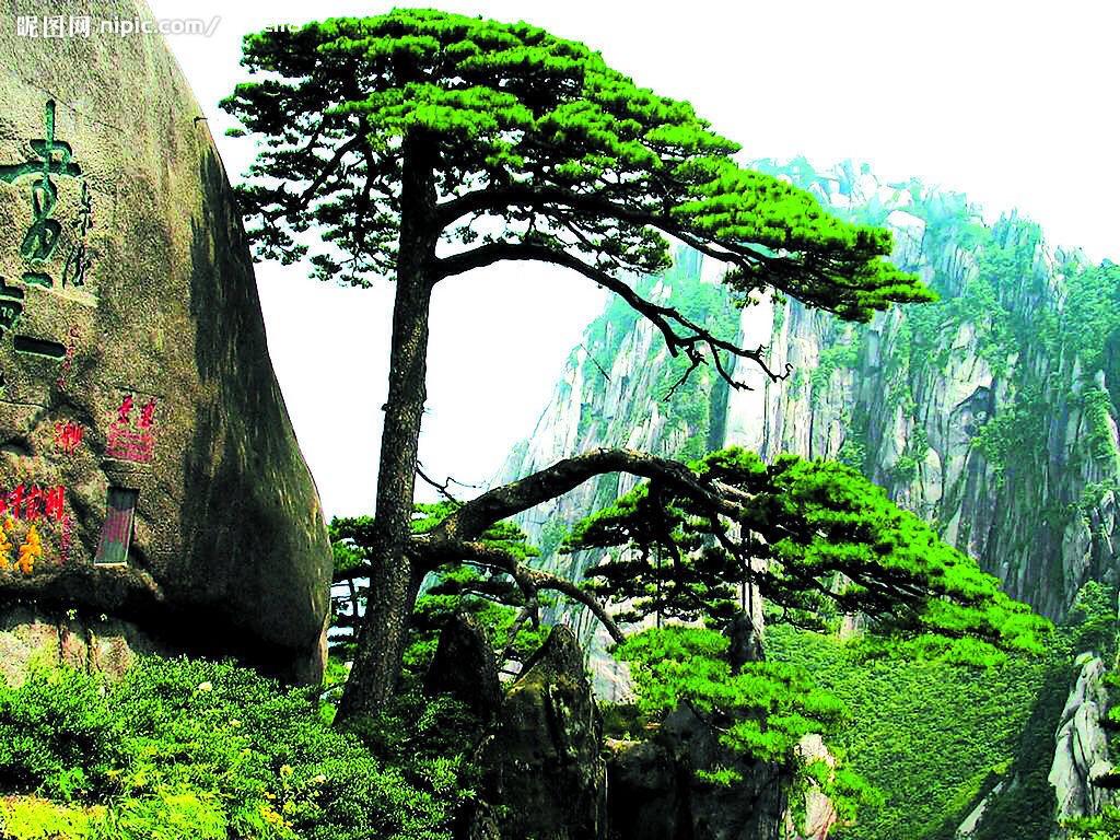 黄山的标志性景观,也是安徽省的象征之一,从人民大会堂铁画《迎客松》