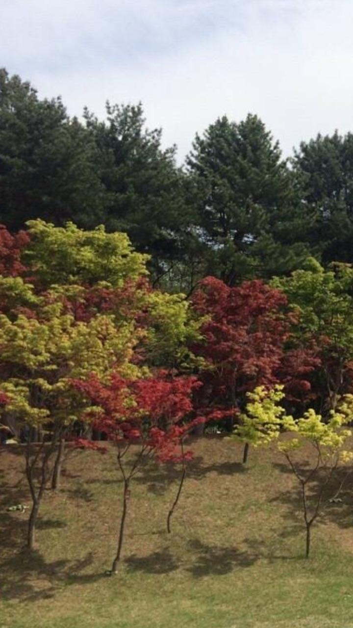 韩国南山公园,这里的空气清新,鸟语花香,风景迷人