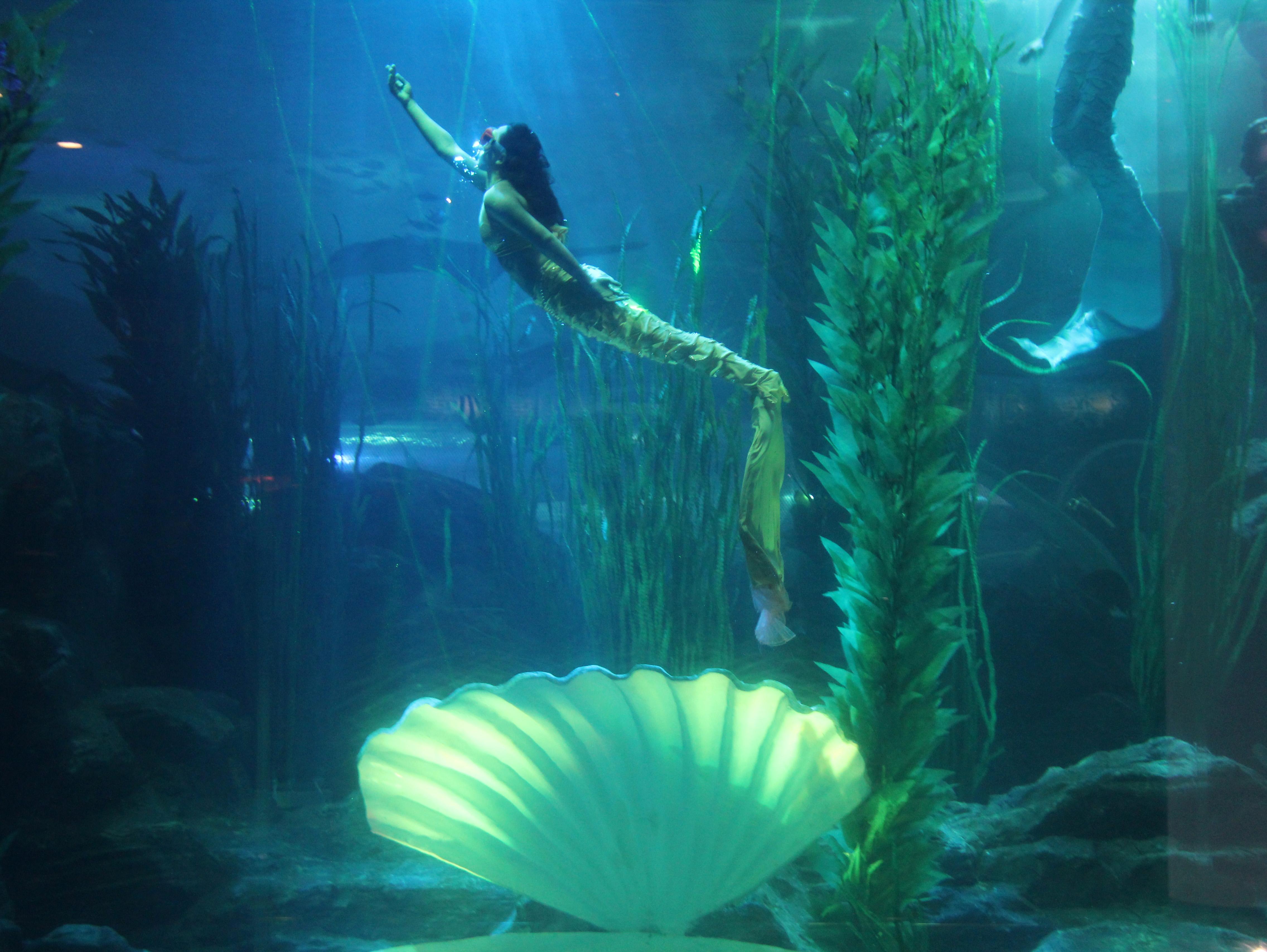 壁纸 动物 海底 海底世界 海洋馆 水族馆 鱼 鱼类 4544_3416