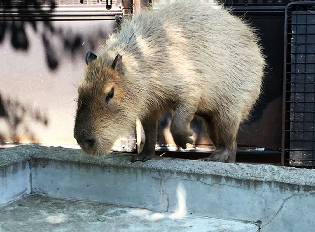 东京上野动物园好玩吗,东京上野动物园景点怎么样