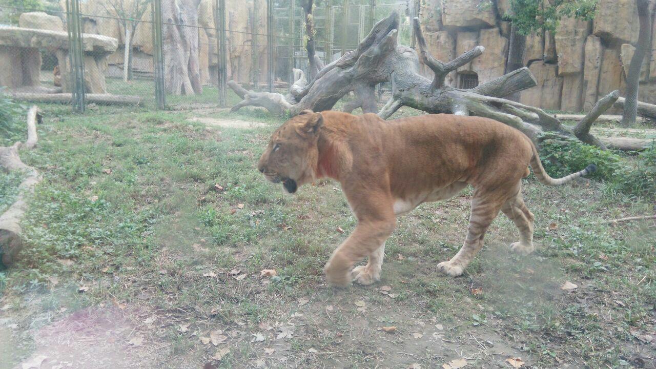【携程攻略】上海上海野生动物园好玩吗,上海上海野生