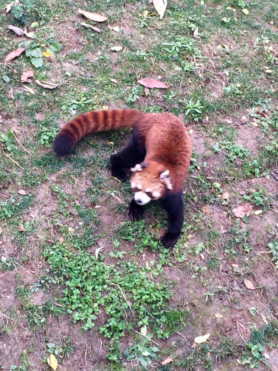秦岭野生动物园旅游景点攻攻略阿拉木图自助游略图图片