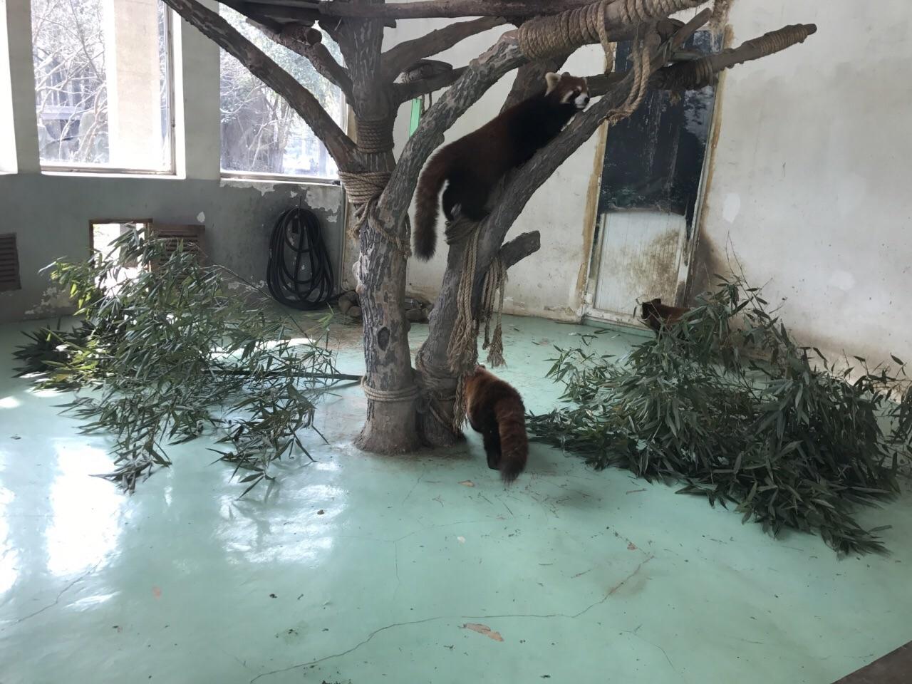 个人觉得去这里还是非常划算的,也确实非常非常的超值。里面除了今天没有看到熊猫之外,别的都看到了。因为熊猫馆在扩建新的熊猫馆,所以熊猫我以为好像是暂时性回四川了。但是小浣熊也好,有熊猫也好,所有的动物正如所有网友说的真的是全部看到。就是。动物园门口停车的停车场位置太少。没办法停在路边被贴了一张罚单。所以友友去的话一定要把车停在停车场里面,无论多远,千万不要停在路边。 也希望以后有机会再继续去!门口的玩偶可以免费拍照,对小朋友特别友善。另外,今天非常幸运碰到了两位汉装美女!