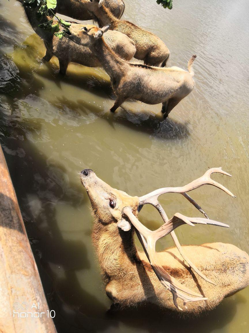 杭州湾湿地攻略国家尼泊尔自由行公园7天图片