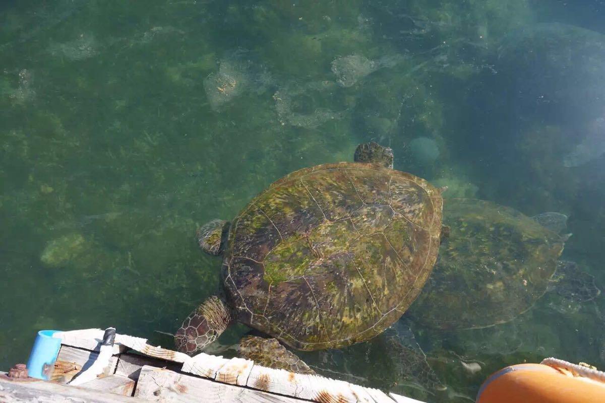 壁纸 动物 龟 海底 海底世界 海洋馆 水族馆 1200_800图片