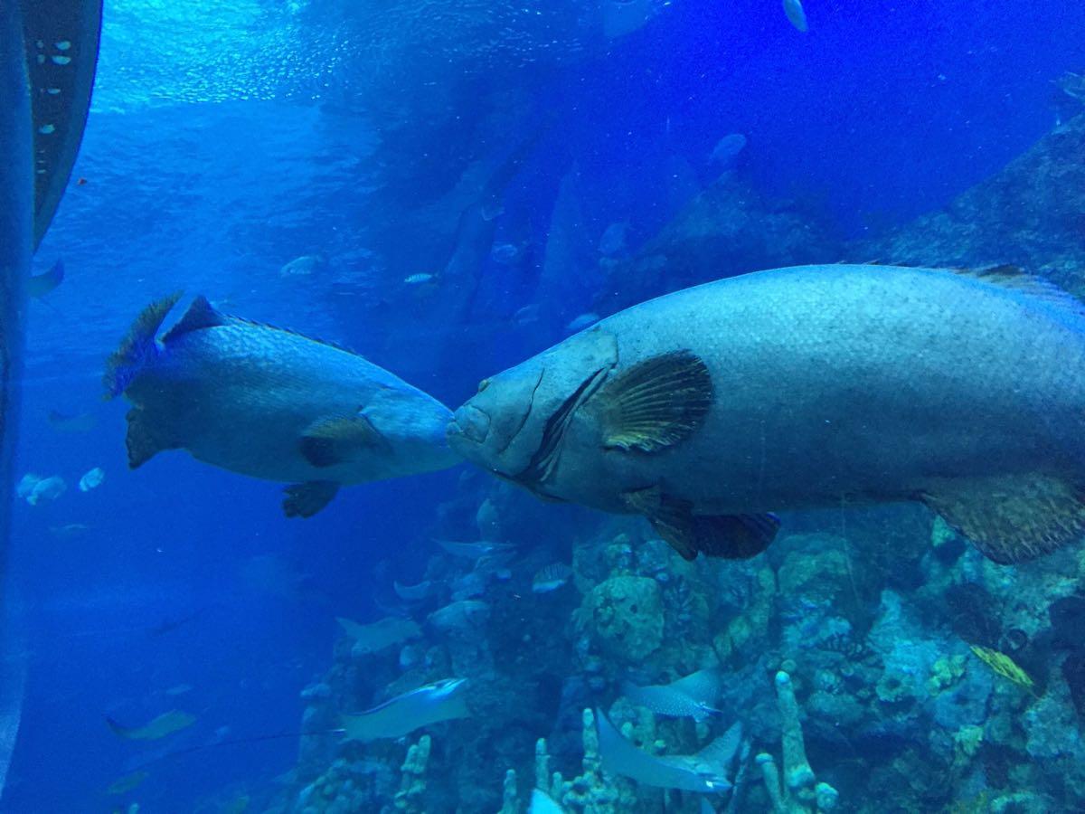 鲸鲨馆最大的亮点有巨型玻璃钢,里面有大大小小的鱼类游过,让你置身于