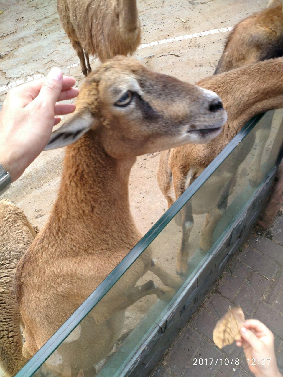广州广州动物园好玩吗,广州广州动物园景点怎么样