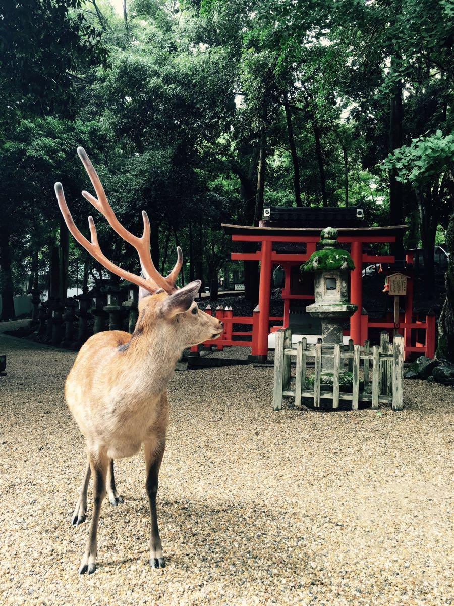手绘公园动物图片