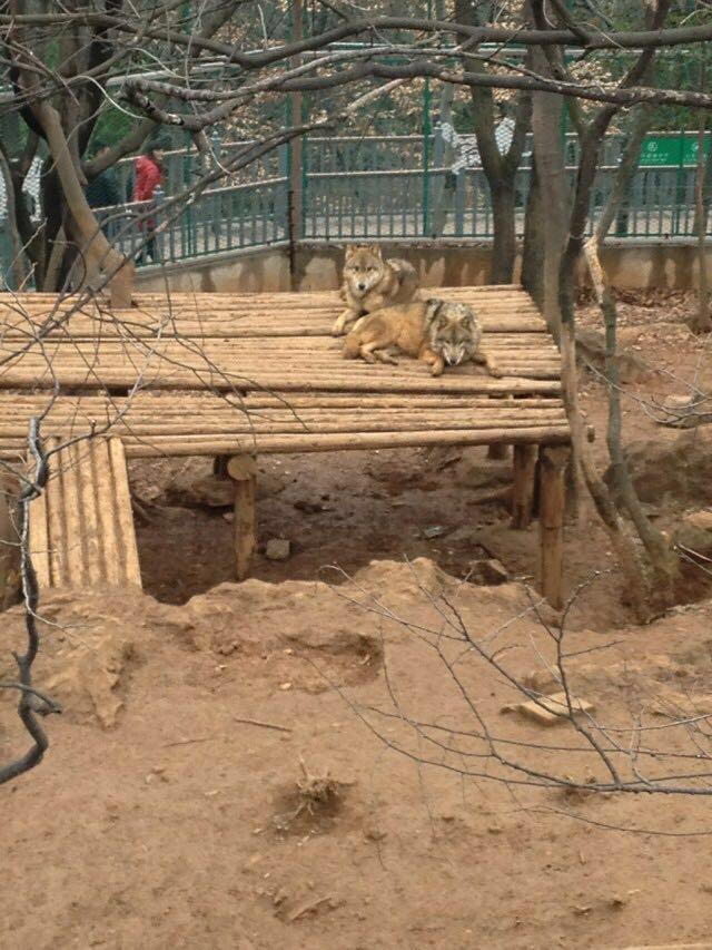 【携程攻略】江苏南京红山森林动物园好玩吗,江苏红山