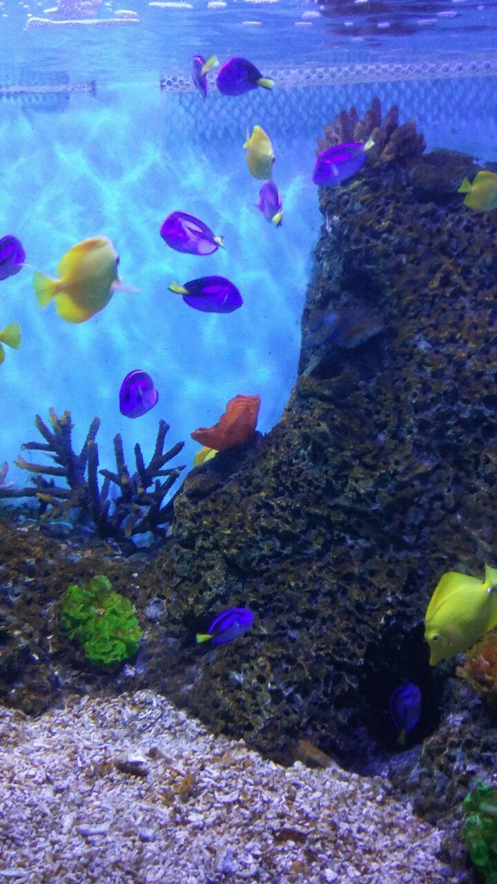 壁纸 海底 海底世界 海洋馆 水族馆 桌面 720_1280 竖版 竖屏 手机