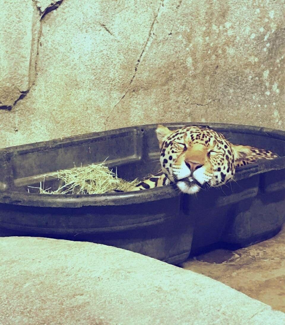 看到了好多动物,尤其是在观看猫科动物的时候,发现这些猫科动物的样子