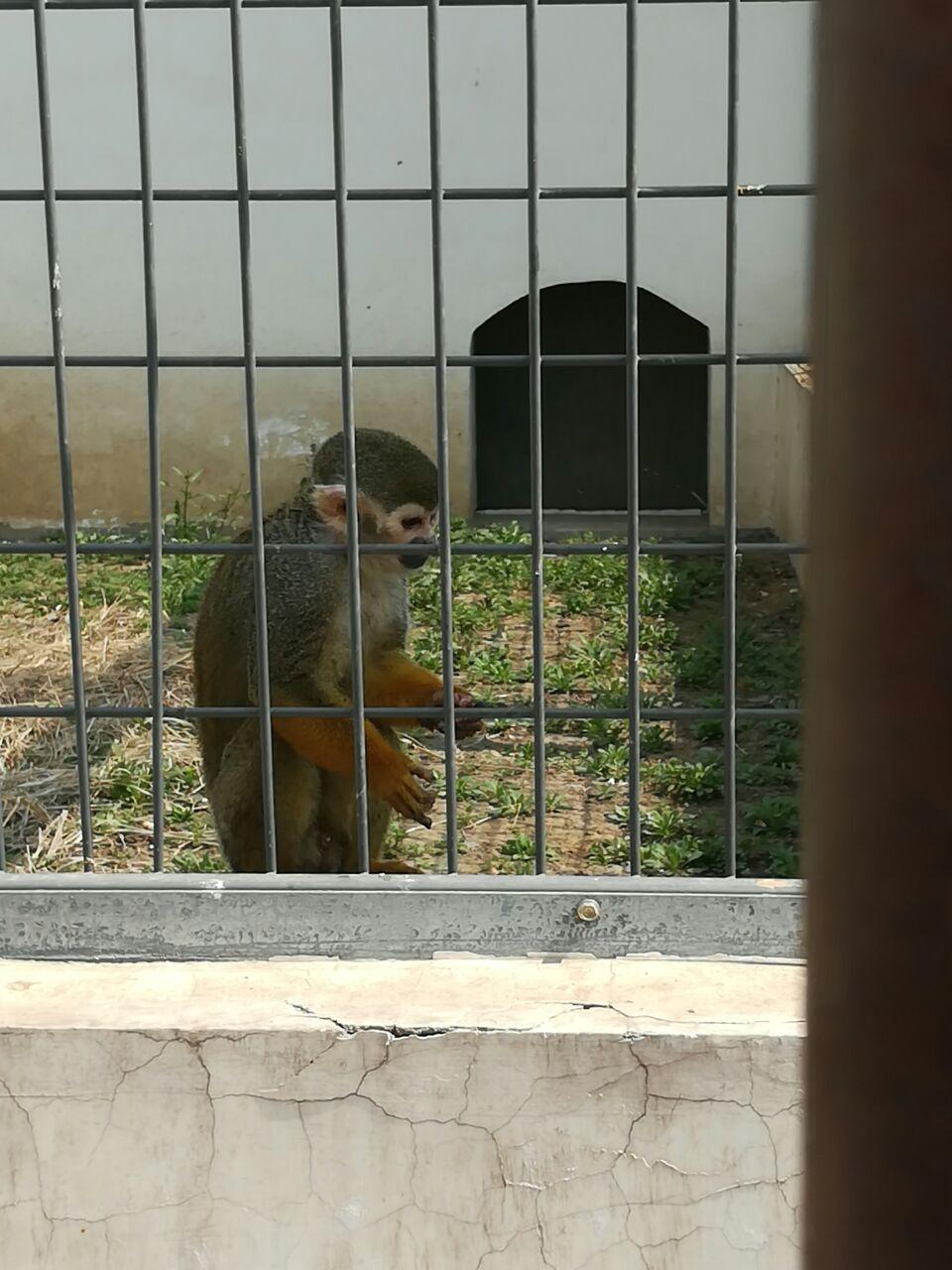 唐山天鹅湖动物乐园好玩吗,唐山天鹅湖动物乐园景点样
