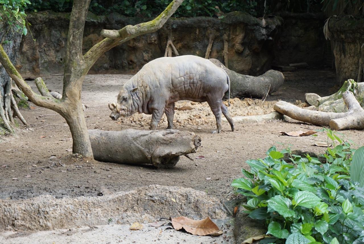 壁纸 犀牛 野生动物 1280_856