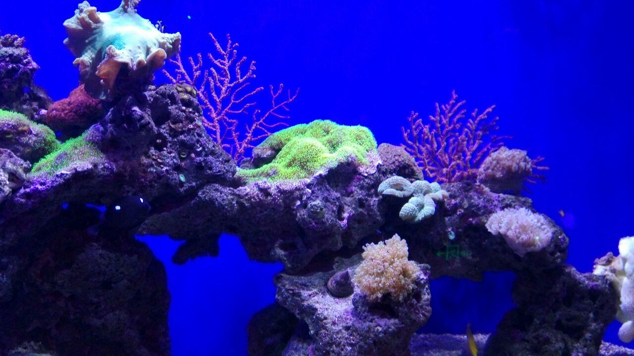 海底世界虽然小,但是动物的品种很多,可谓麻雀虽小但五脏俱全,值得带