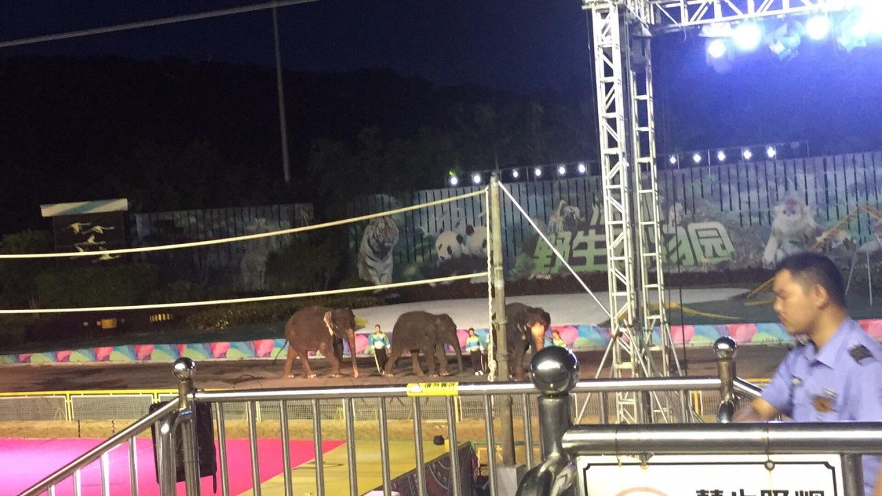 【携程攻略】深圳深圳野生动物园景点,买的是夜场的票
