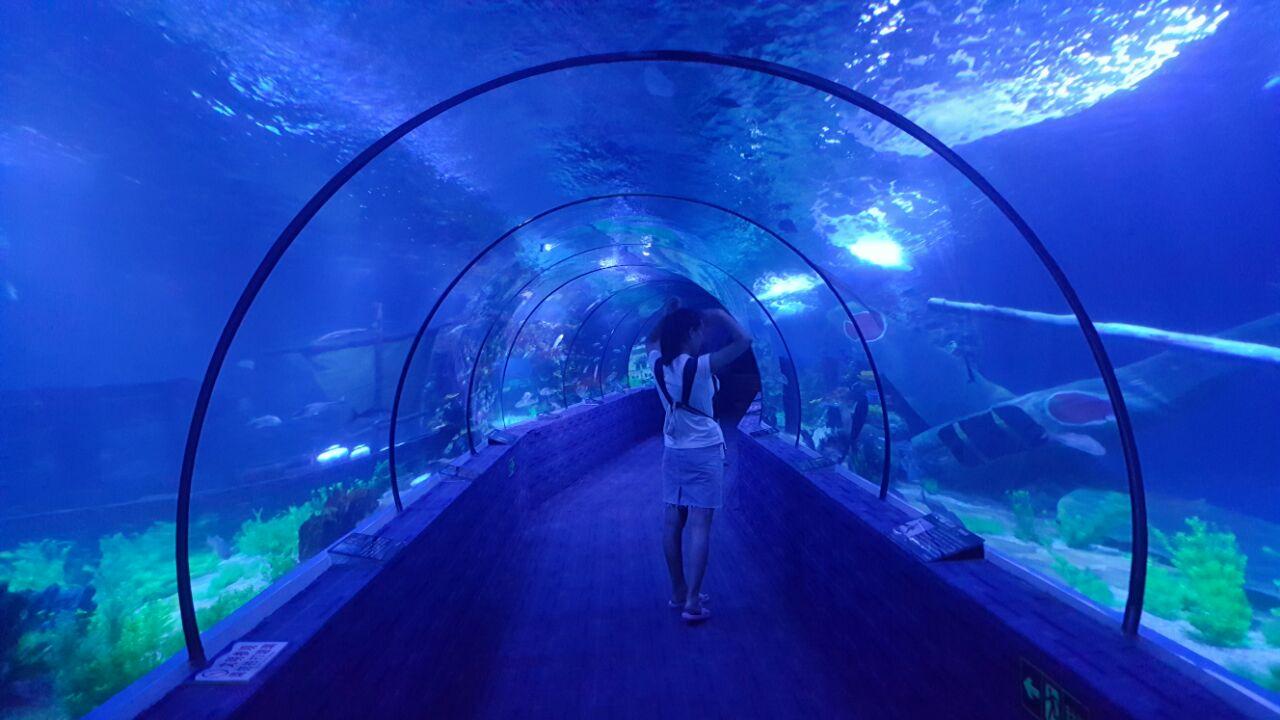 馆_壁纸 海底 海底世界 海洋馆 水族馆 1280_720