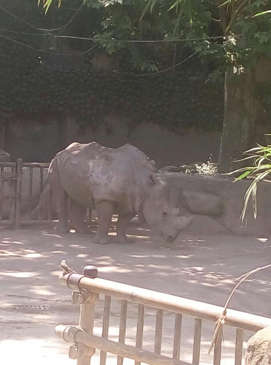 动物园里小动物的毛色不太好,好几只动物脱毛,然后动物园布局不合理
