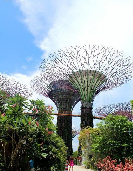 滨海湾花园门票_滨海湾花园,新加坡滨海湾花园攻略/地址/图片/门票【携程攻略】