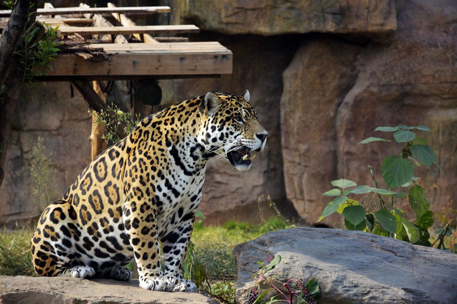 长沙生态动物园,长沙长沙生态动物园攻略/地址/图片