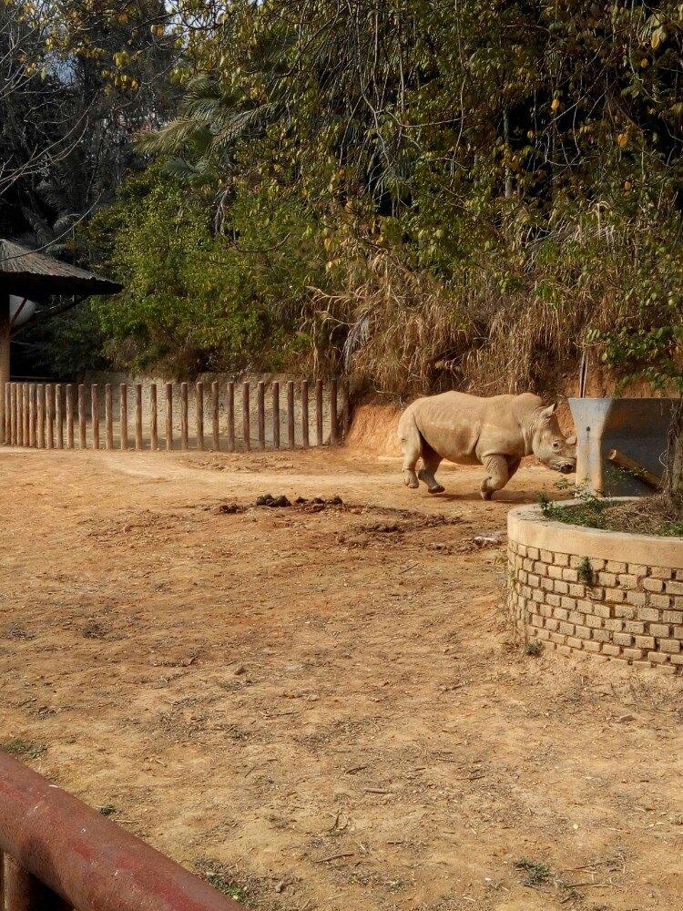 【携程攻略】福建福州福州动物园好玩吗,福建福州动物