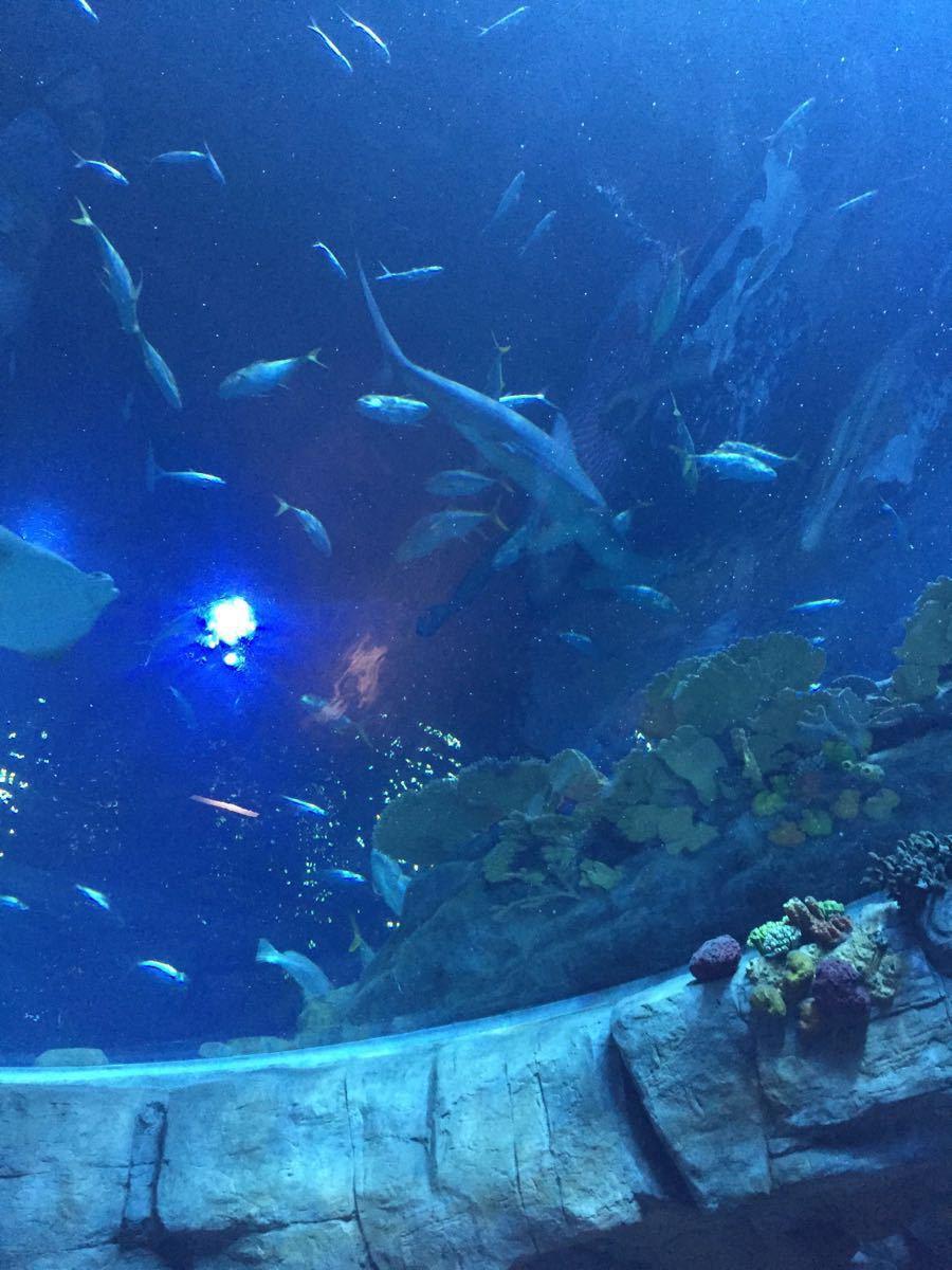 每个人香港之行的必到景点!!! 【景点介绍】 香港海洋公园是一座集海陆动物、机动游戏和大型表演于一身的世界级主题公园,也是全球最受欢迎,入场人次最高的主题公园之一。 2012年,香港海洋公园参加全球最佳主题公园角逐,更是击败了法国狂人国主题公园和美国圣克鲁斯主题公园两大强劲对手,被评为全球第一主题公园,成为亚洲首间获得此项殊荣的主题公园。 【位置交通】 香港海洋公园位于香港港岛南区黄竹坑。 以前去海洋公园,那可是没有地铁直达的,2016