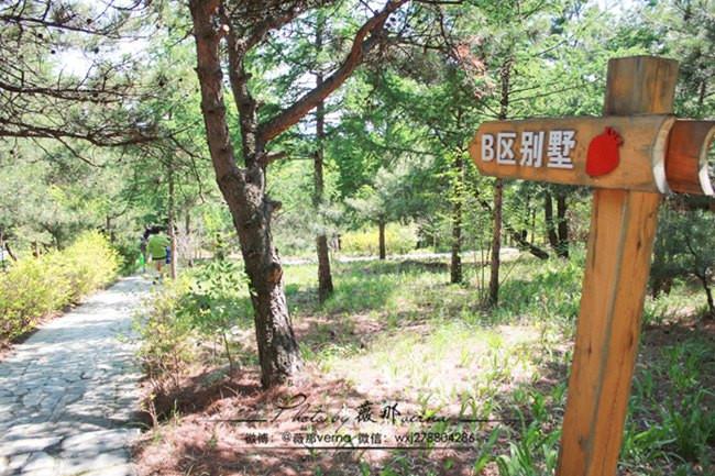 入睡蒲洼松林木屋,看梯田,品原生态蘑菇宴