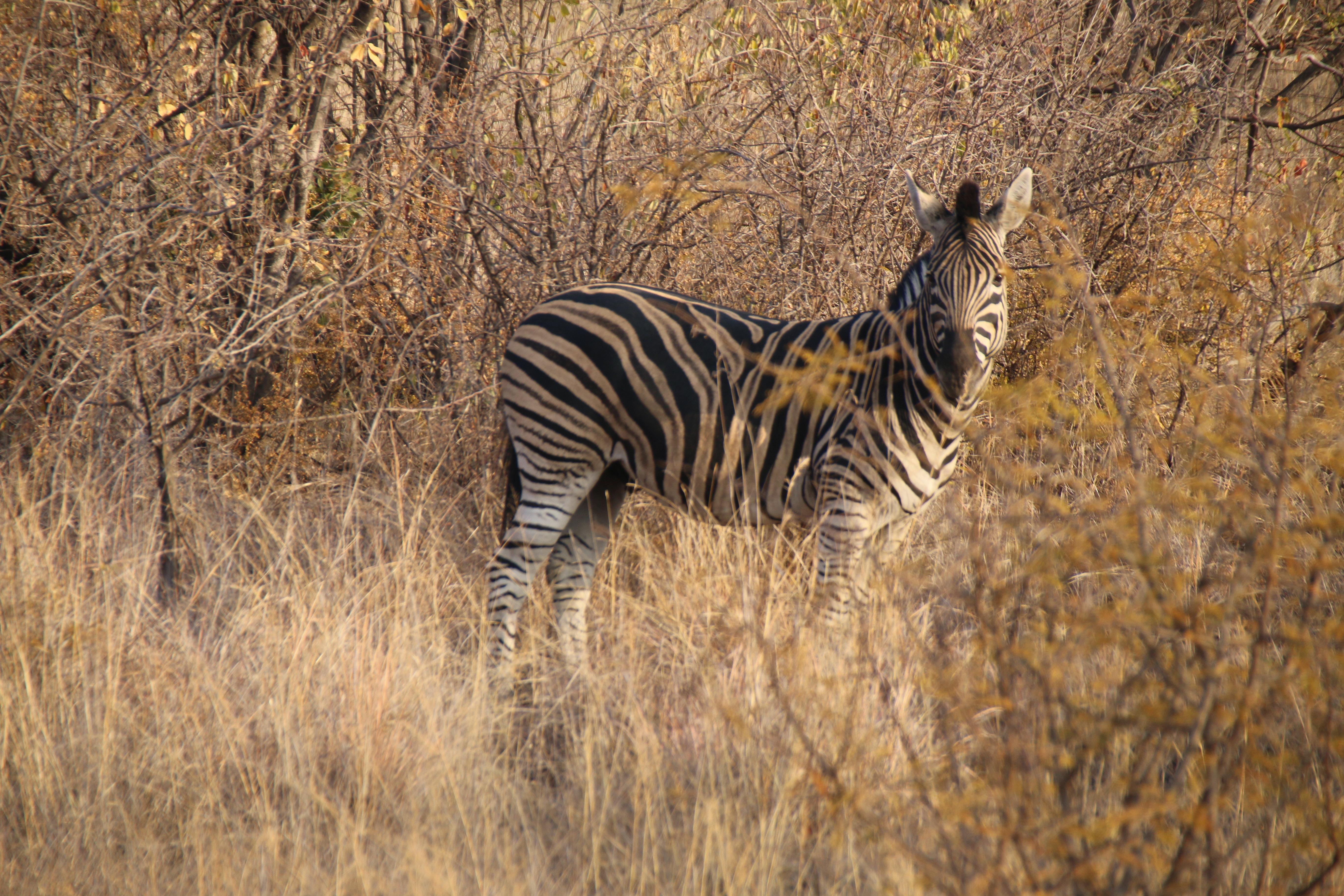 2015年7月南非旅游记(约翰内斯堡野生动物园